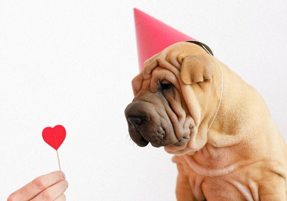 Funny-Birthday-Image
