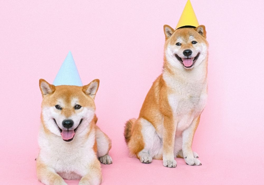 Funny-Happy-Birthday-Wish-Image